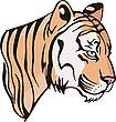 Kopf eines kleinen Tigerchen