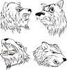 Aggressive Bärenköpfe