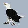 ID 3755065 | American Eagle | Illustration mit hoher Auflösung | CLIPARTO