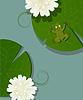 Frosch und Lotus