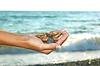 ID 3971941 | Marine pebbles in female hand | Foto stockowe wysokiej rozdzielczości | KLIPARTO