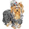 Niedliche reinrassige Hund Yorkshire-Terrier | Stock Vektrografik