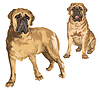 Zwei Bilder von Mastiff | Stock Vektrografik