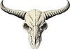 Büffel-Schädel