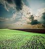 Czarny zaoranym polu pod nieba | Stock Foto