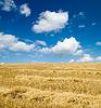Zebrane żniwa na polu | Stock Foto