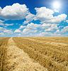 Zebrane żniwa na polu pod słońcem | Stock Foto