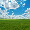 Rolnych pole zielone i nieba | Stock Foto