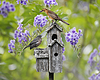 Birds On Bird House | Stock Foto