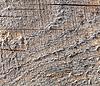 Деревянная поверхность | Фото