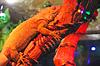 Camaleón está durmiendo en la rama seca de la luz roja | Foto de stock