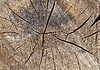 ID 3957604 | Texture of tree. log | 高分辨率照片 | CLIPARTO