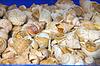 바다 포탄은 시장에서 판매하고 있습니다 | Stock Foto