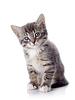 灰色条纹的小猫坐在 | 免版税照片