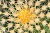 ID 3872482 | Kaktus | Foto stockowe wysokiej rozdzielczości | KLIPARTO