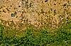 Beton z glonów | Stock Foto
