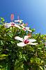 ID 3863445 | Beautiful bush white flowers with blue sky | Foto stockowe wysokiej rozdzielczości | KLIPARTO