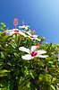 ID 3863445 | 푸른 하늘 아름 다운 부시 흰색 꽃 | 높은 해상도 사진 | CLIPARTO