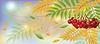 Herbst Banner mit Eberesche Beeren, Vektor