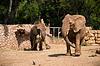 두 코끼리 | Stock Foto