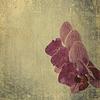 Teksturowane stare tło papieru z purpurowym | Stock Foto