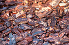 Background of pine bark nuggets layer used for | Stock Foto