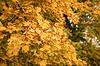 Jesienne liście klonu tle | Stock Foto