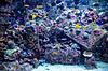 Aquarium tropische Fische auf Korallenriff | Stock Foto