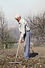 Elderly man cleans rake dry leaves in garden | Stock Foto
