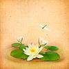 Seerose (Lotus) und Libelle Wasserorganismen Zeichnung | Stock Foto