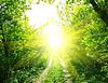 路和阳光 | 免版税照片