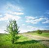 Drzewa przy drodze kraj | Stock Foto