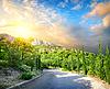 Cypress Park in den Bergen | Stock Foto