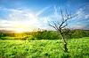 Suche drzewo na łące | Stock Foto