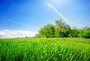 Trawy w polu | Stock Foto