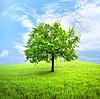 Baum im Feld | Stock Foto