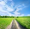 Landstraße im Feld | Stock Foto