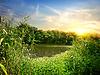 Schilf am Fluss | Stock Foto