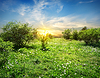 Sunny meadow with flowers | Stock Foto