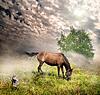 马在草甸 | 免版税照片