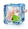 Huhn in Eiswürfel | Stock Foto