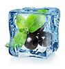 Oliven in Eiswürfel | Stock Foto