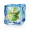 Rosenkohl in Eiswürfel | Stock Foto