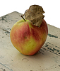 苹果 | 免版税照片