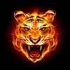 Head of tiger in Flammen