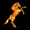 Feuer Pferd Aufbäumen