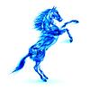 Blue fire Pferdes Aufzucht