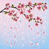 Bunte Feder Hintergrund mit Sakura-Blüte -