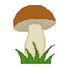 Pilz isoliert auf weißem Hintergrund