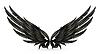 Flügel schwarz,